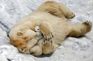 Как растолковать сон про медвежат