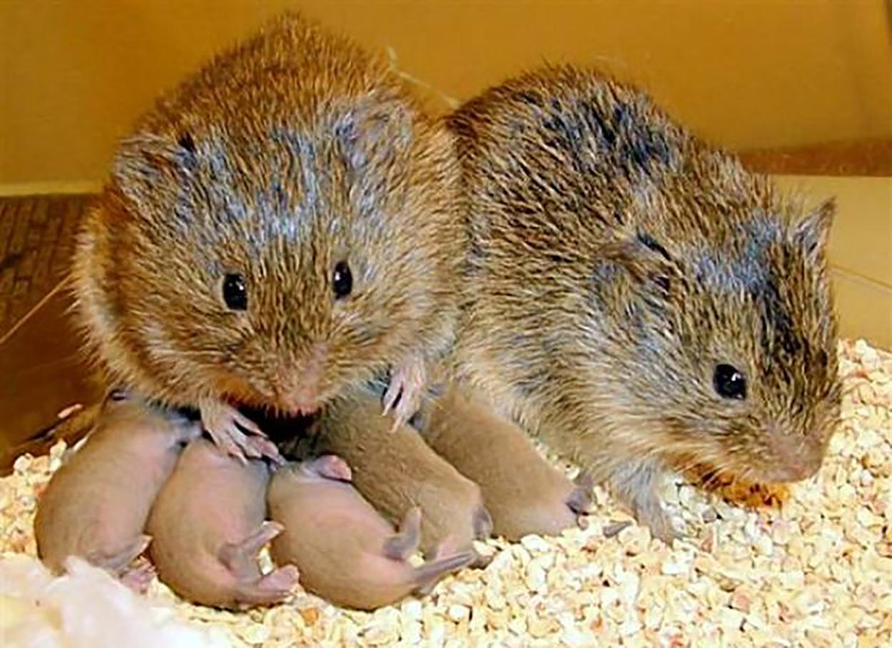 К чему снятся мыши в большом количестве: различные толкования
