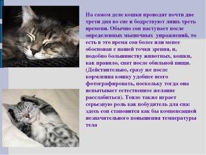 К чему снятся большие кошки