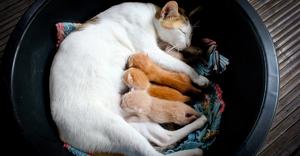 Снятся ли животным сны