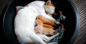 Сон про кошек