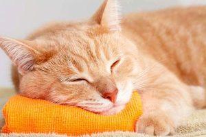 К чему сниться когда кошки дерутся