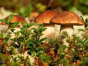 К чему снятся грибы во сне