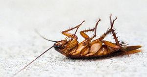 Сон о таракане: толкование