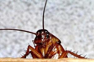 Толкавание сна с тараканами