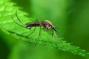К чему снится комар