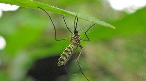 Сон о комарах