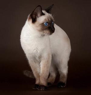Что означает сновидение о котах по современных сонниках