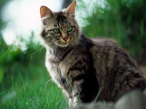 Приснился красивый темный котик что означает