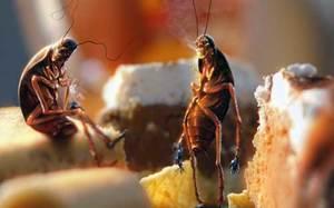 К чему снятся тараканы во сне женщине - бегающие, много, живые, подробное толкование