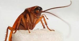 Как растолковать сон про тараканов