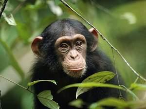 Как растолковать сон про обезьян