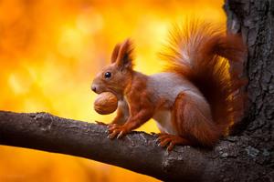 К чему снятся белки: на дереве, дома, в руках