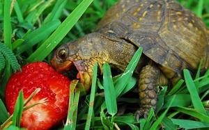 К чему видеть во сне черепах