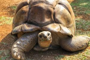 Как растолковать сон про черепаху