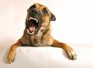 К чему снится злая лающая собака thumbnail