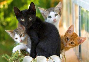 Коты приснились девушке