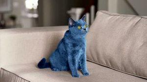 Приснился синий кот