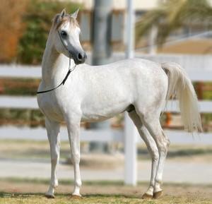 Приснилась лошадь значение