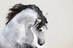 Приснилась белая лошадь