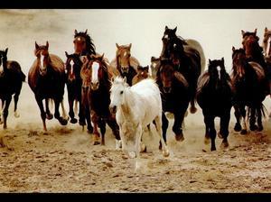 Сон табун лошадей