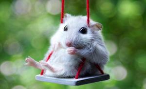 К чему снятся мыши - разных цветов?