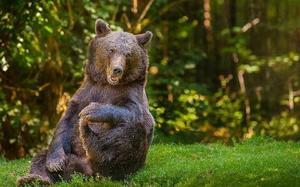 Толкование сна про медведя