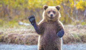 Приснились медвежата