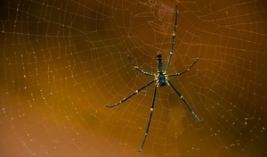 Что означает по соннику паук во сне