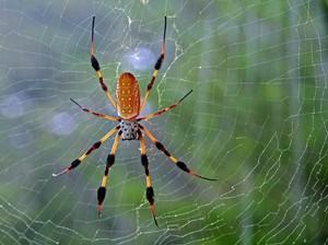 Хорошо ли видеть во сне паука
