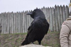 Трактование птиц