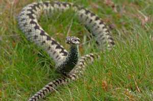 К чему снятся змеи - толкование снов