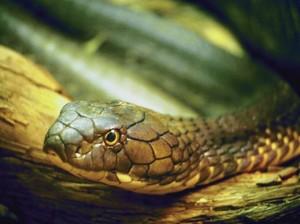 Увидеть змею во сне - значение и толкование