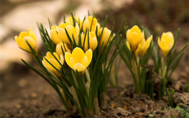 Видеть желтые цветы во сне
