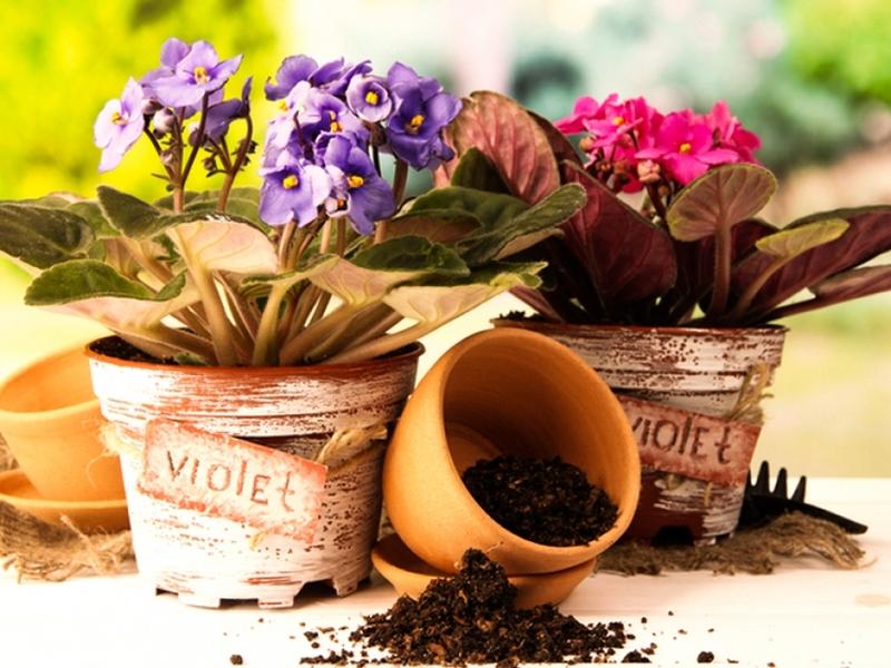 Пересаживать цветы во сне