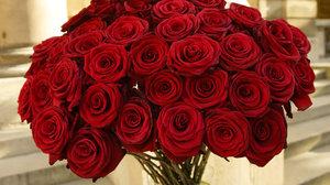 Приснилась роза во сне