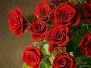 Роза во сне женщины