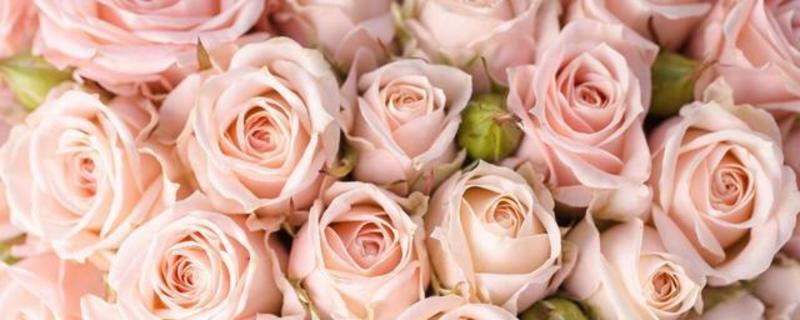 К чему видеть во сне розы