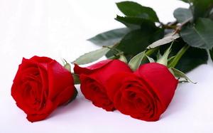 Характеристика сна про розу