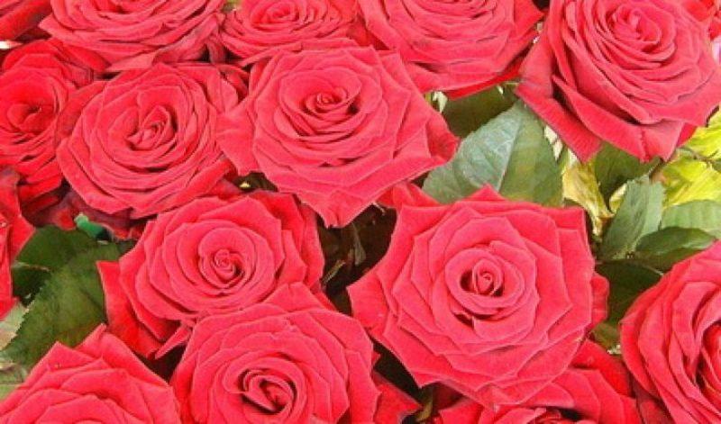 Сонник и толкование сна про розу