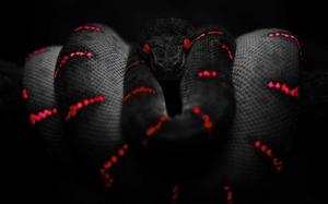 Сонник черные змеи кусают
