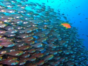 Значение сна про рыбу