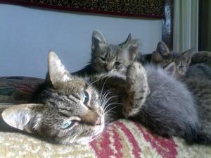 Снится сон, кошка с котятами, к чему