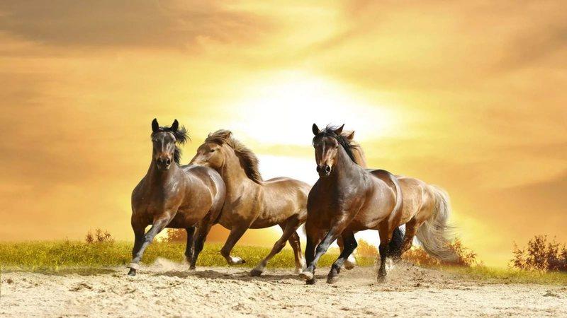 Как солярная сила белая, золотая или огненная лошадь появляется вместе с богами солнца, впряженная в их колесницы; как лунная элемент влаги, море и хаос сила — боевые кони океанических богов.