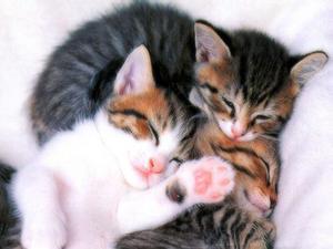 Рождение котят во сне