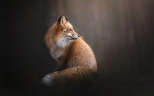 К чему снятся лисы рыжие