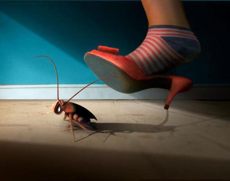 Беременный таракан во сне 40