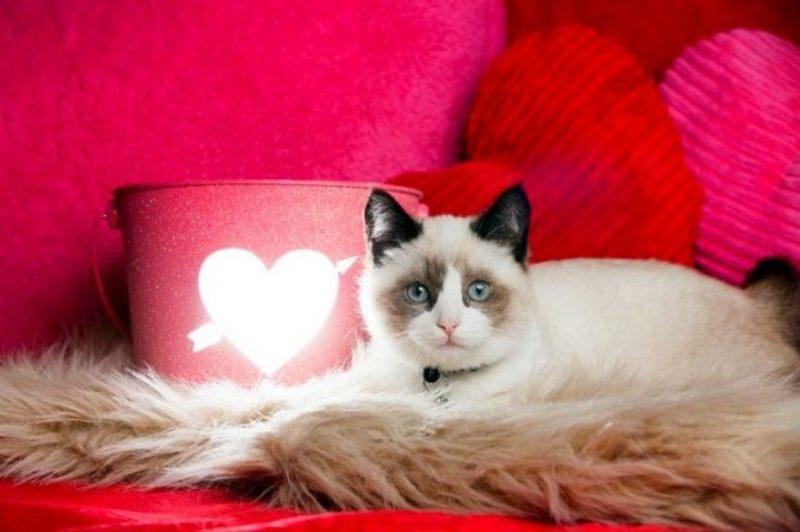 К чему снятся пушистые котята беременной женщине 70